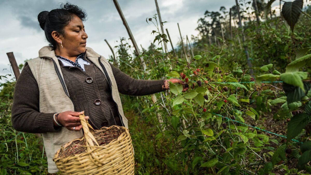 Dificil-situacion-de-agricultores-colombianos-debido-a-la-pandemia-y-al-paro-nacional