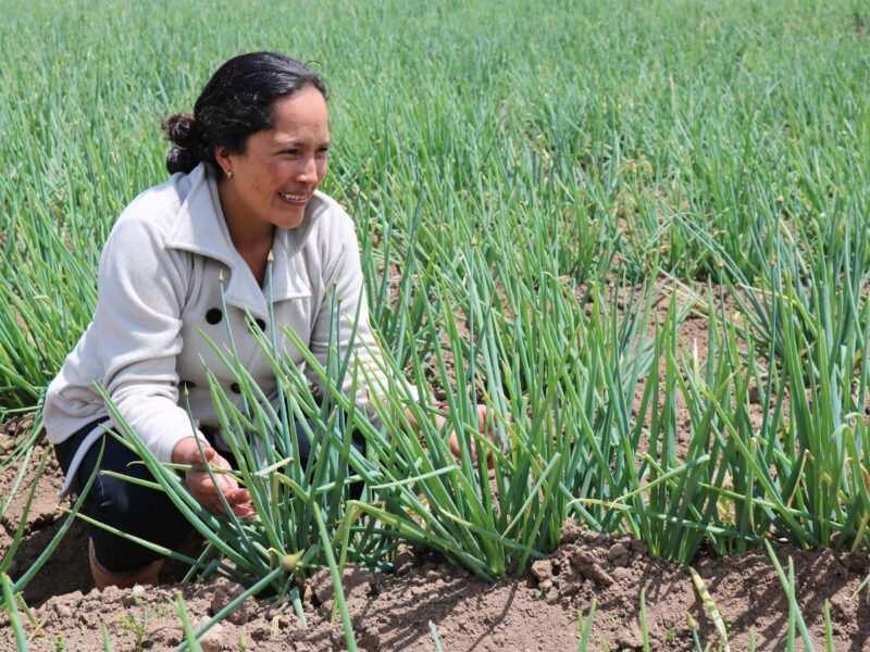 En Contactar celebramos el día de la Mujer Rural apoyando su empoderamiento